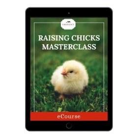 raising chicks masterclass course cover mock up