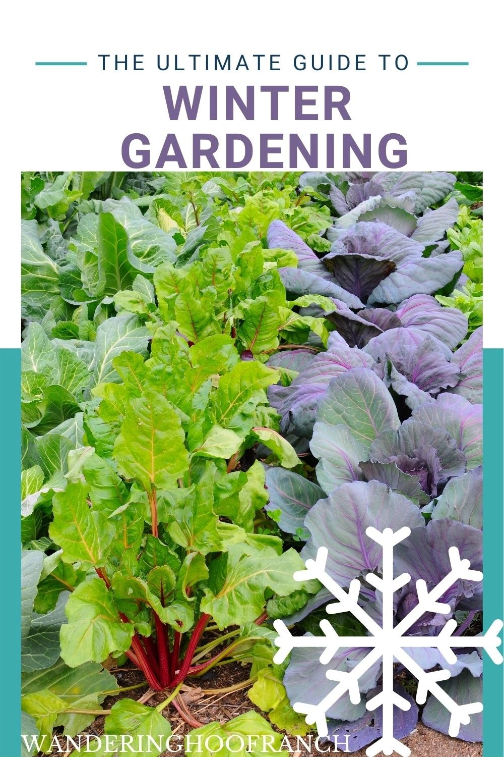 cold hardy winter vegetable garden crops pin image
