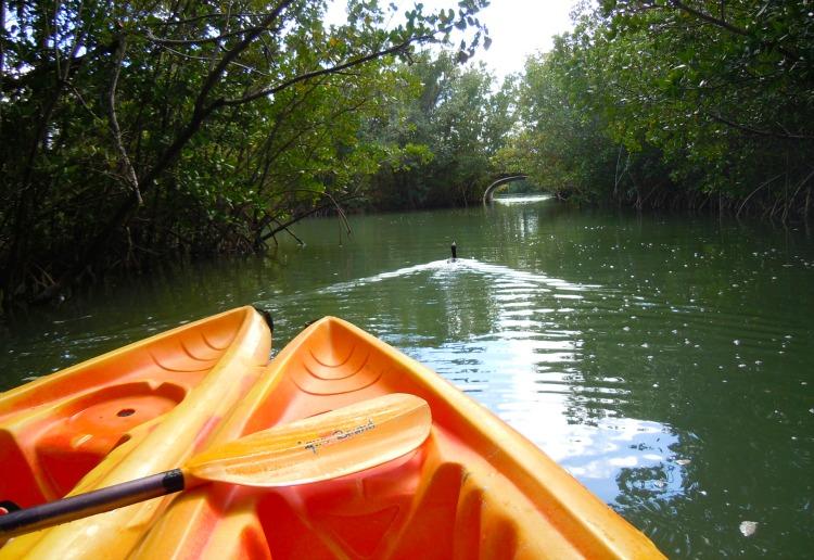 Miami Wandering Redhead