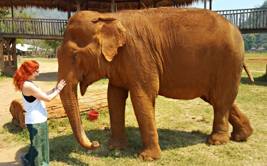 Ethical Elephant Interaction in Thailand