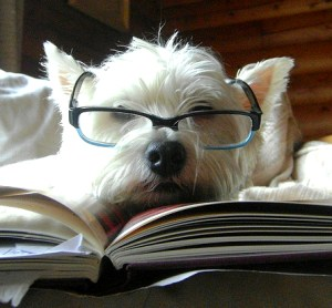 Dog reading book by alicejamieson / flickr
