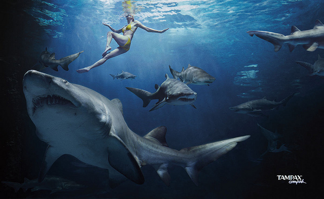 Clever Tampax Ad ~ When Swimming with Sharks