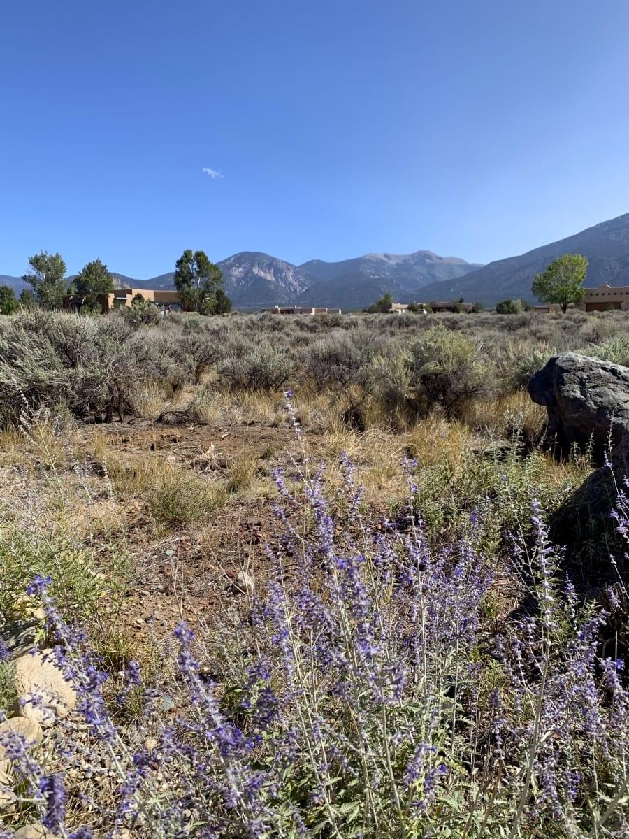 Wild flowers in Taos