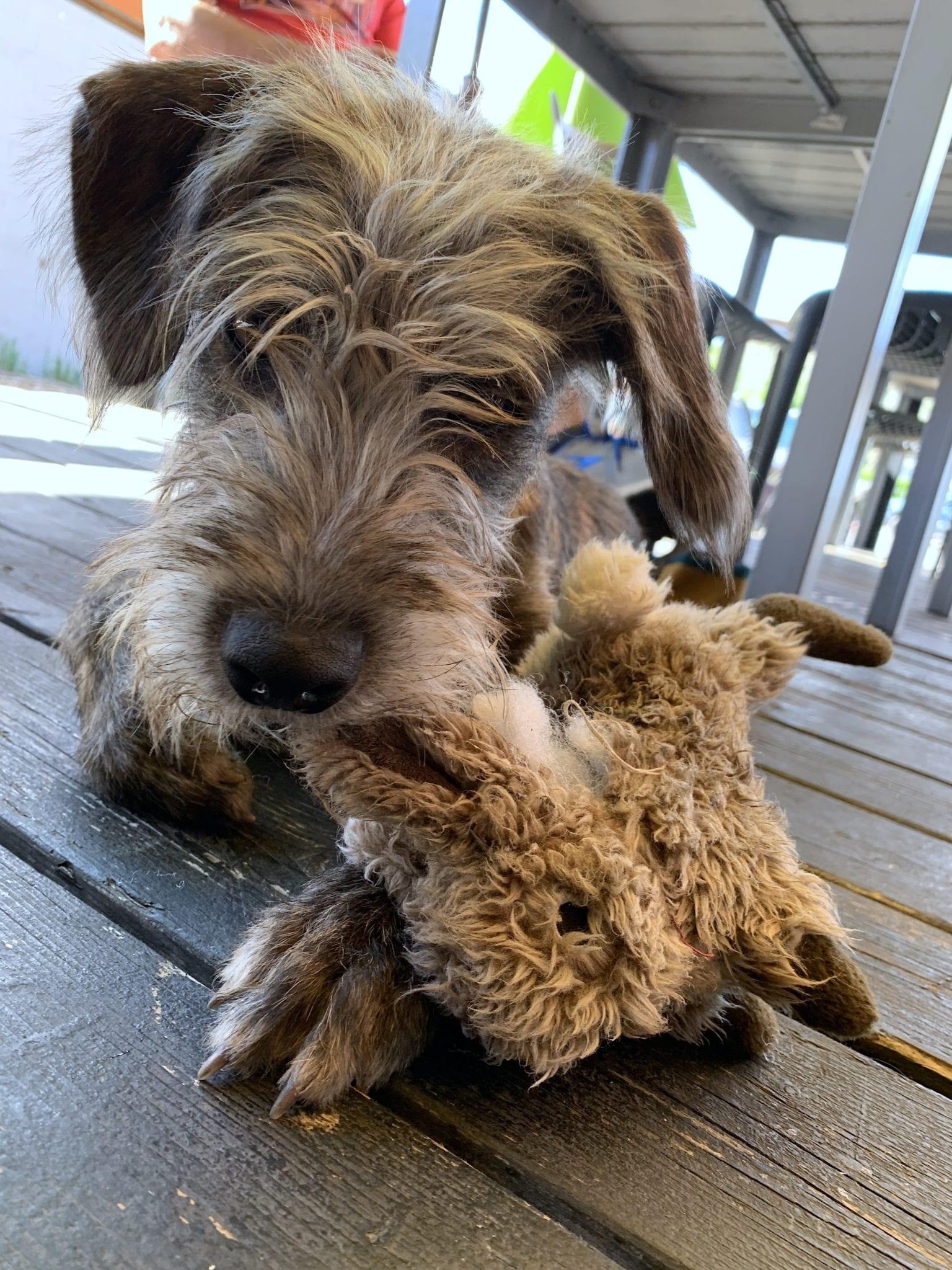 Huey lounging at Hatch