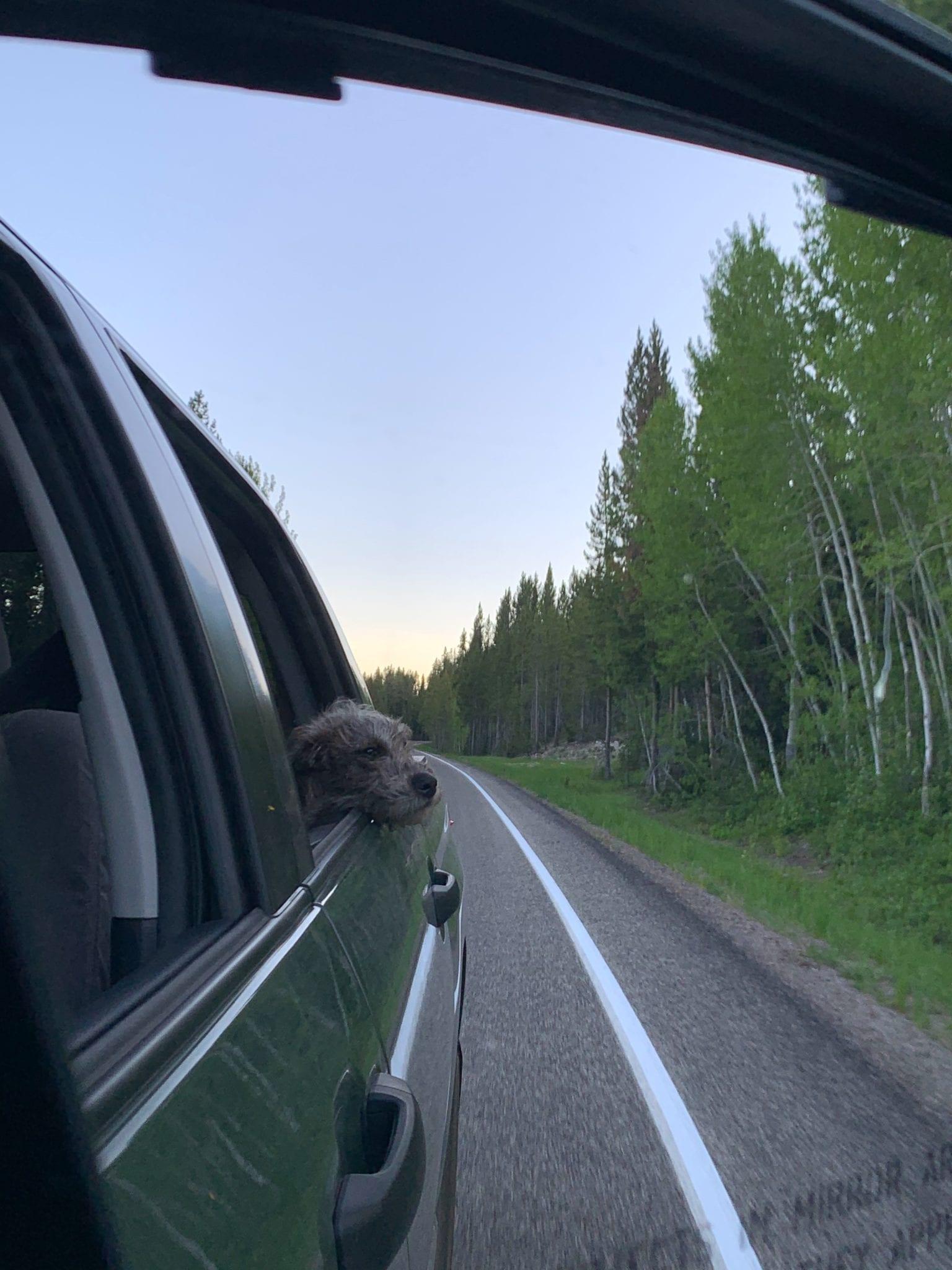 Huey taking in the fresh mountain air