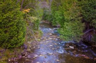 A creek through a forest