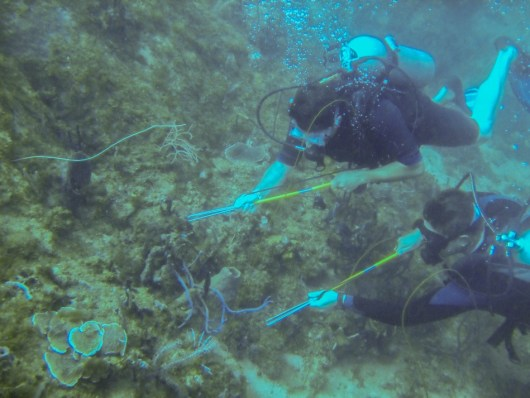 Catching lionfish