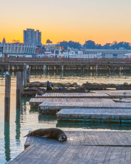 Sea lions bask in the setting sun at the pier in San Francisco