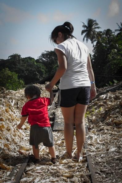 Walking Through the Sugar Cane