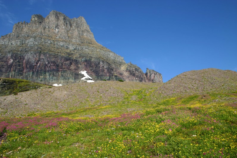 View of flowers and peaks at Glacier National Park in British Columbia which is one of our bucket list destinations in Canada.
