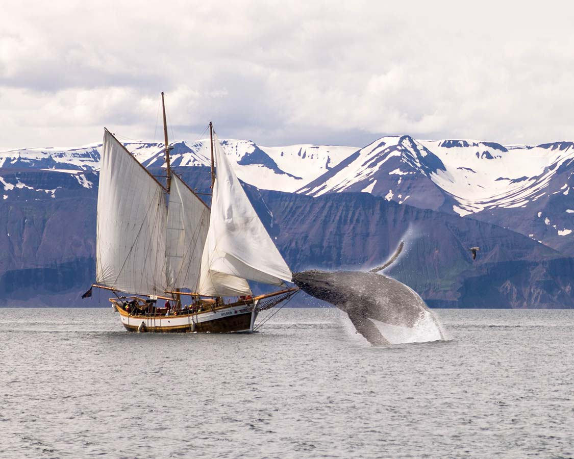 14 Days in Iceland - Whale Watching in Husavik