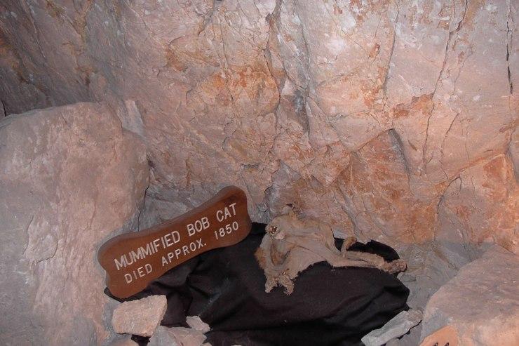 Arizona---Grand-Canyon-Caverns-Bobcat