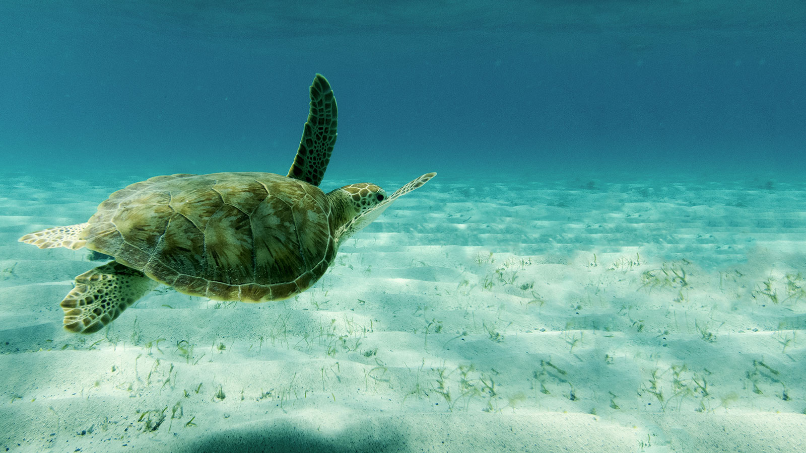 grenadines-swimming-with-turtles-feature