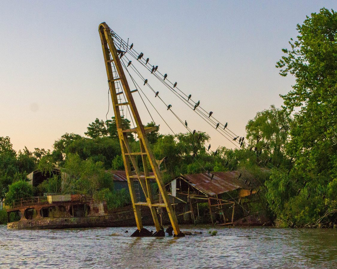Cormorants rest on the lines of a shipyard on the delta Parana in Tigre