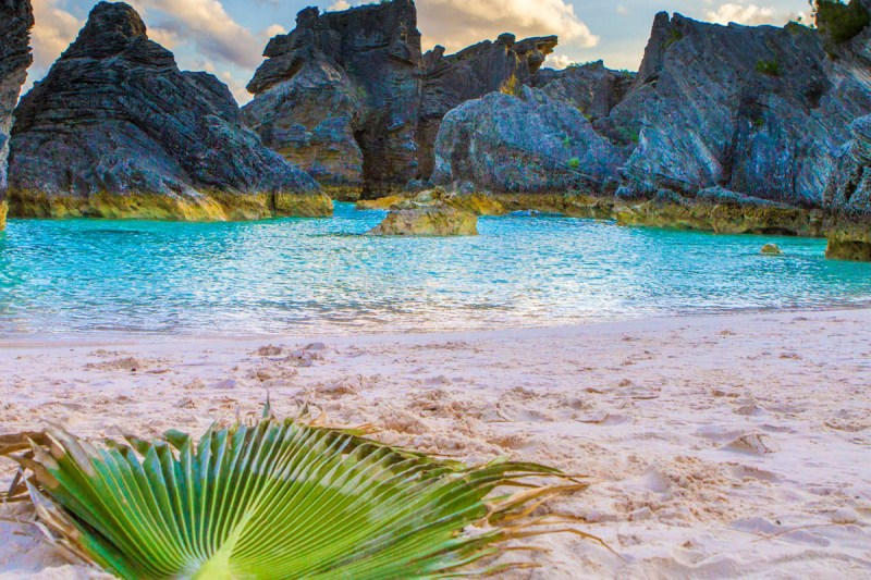 A palm frond rests on the pink sand of Horseshoe Bay Beach in Bermuda, In the background is turqoise water and jagged black rocks
