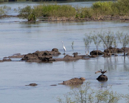 A crane and a cormorant stand on rocks above Iguazu Falls in Argentina