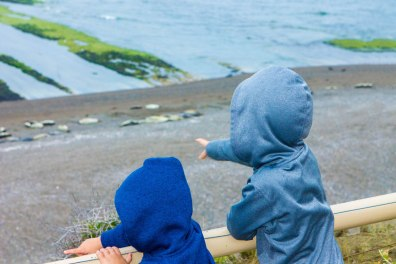 Boys point out Elephant seals on the beach.