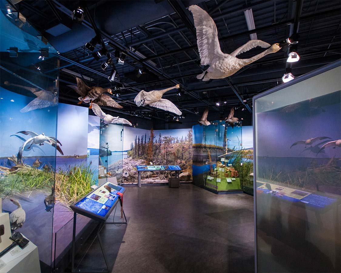 things to do in Yellowknife Prince of Wales Northern Heritage Centre