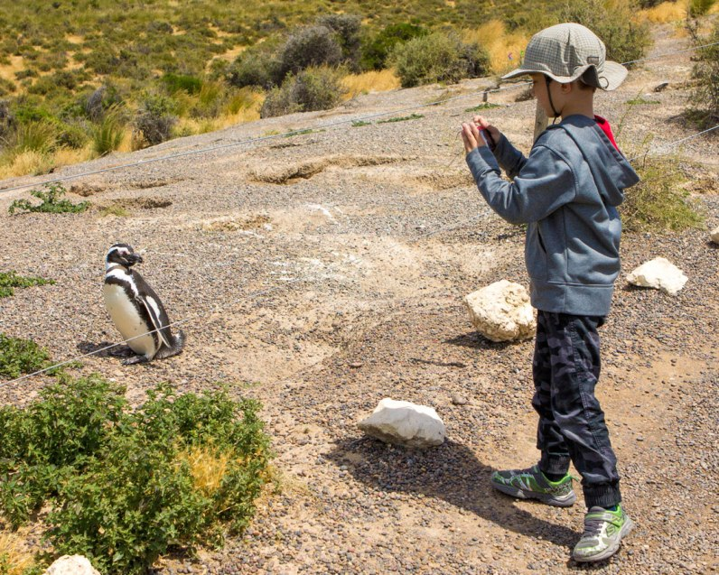 a young boy takes a photograph of a penguin in Punta Tombo Argentina
