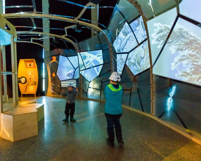 Two young boys walk through a tunnel of screen at the Ontario Science Centre Bio Mechanics Exhibit