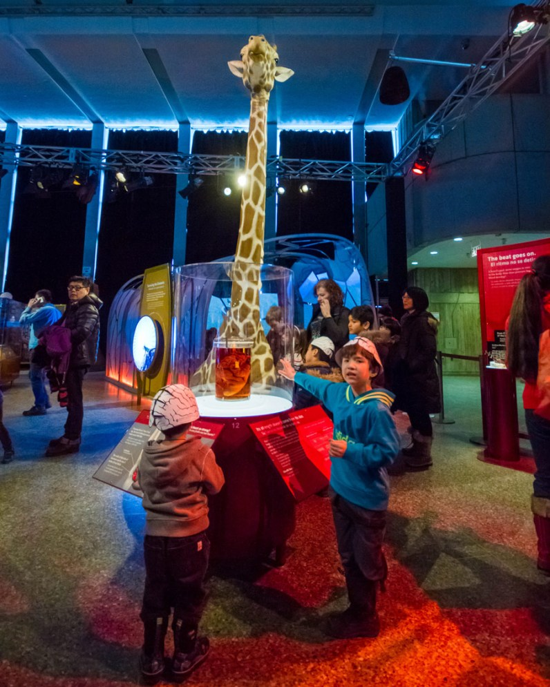 Two young boys interact with a giraffe display at the Ontario Science Centre Bio Mechanics Exhibit