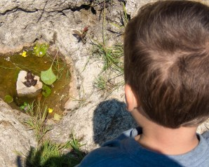 Boy watches a frog at Sauble Falls Provincial Park.