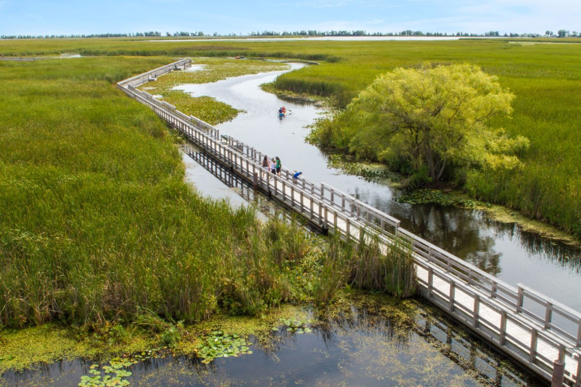 Point Pelee National Park near Windsor Ontario is one of the most amazing places in Canada