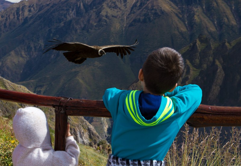 Two young Wandering Wagars boys watch an Andean Condor fly by from a viewpoint in Colca Canyon with kids in Peru