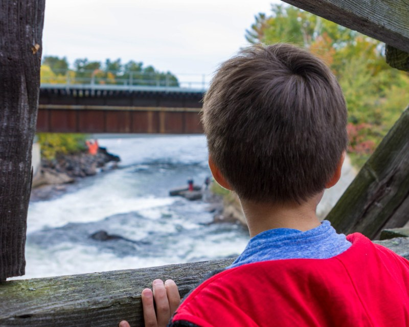 Looking out over Bala Falls during the Bala Cranberry Festival