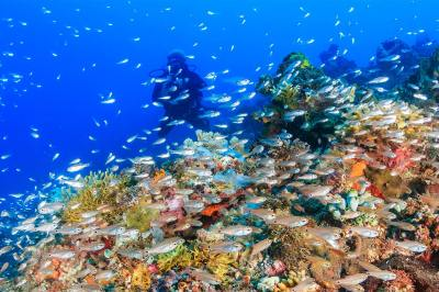 Are you searching for the best diving destinations in the Caribbean for a family SCUBA diving vacation? Discover Bonaire, Cayman Islands, Belize, and more!