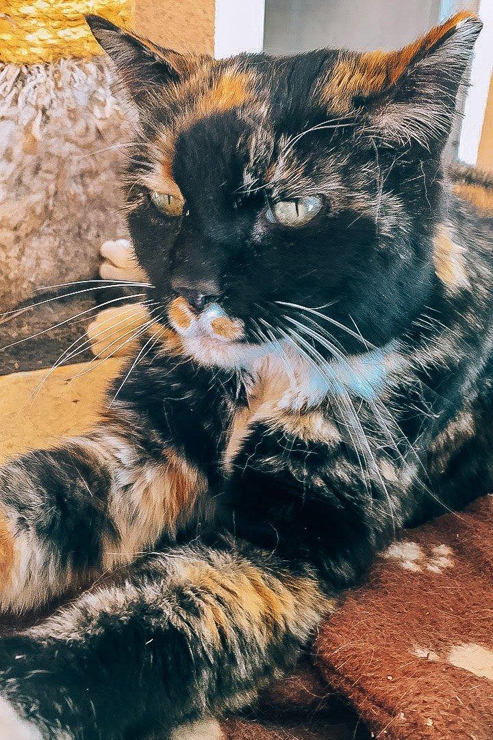 Best Friends Animal Society rescue tabby cat