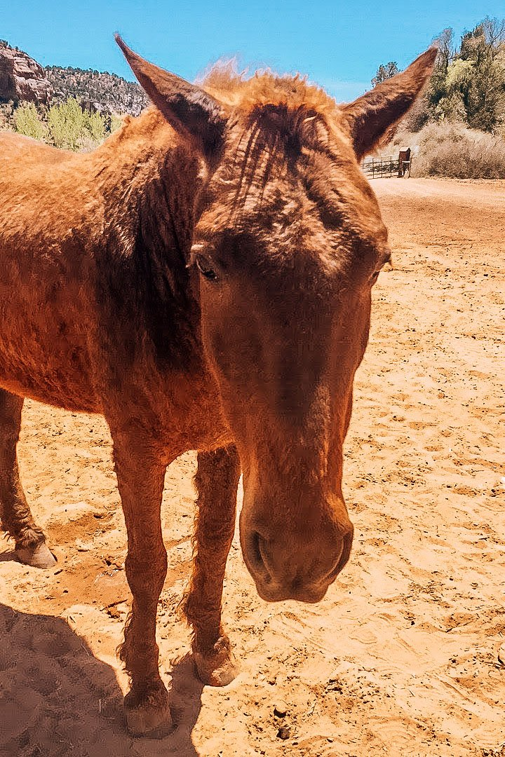 Best Friends Animal Society rescue horse