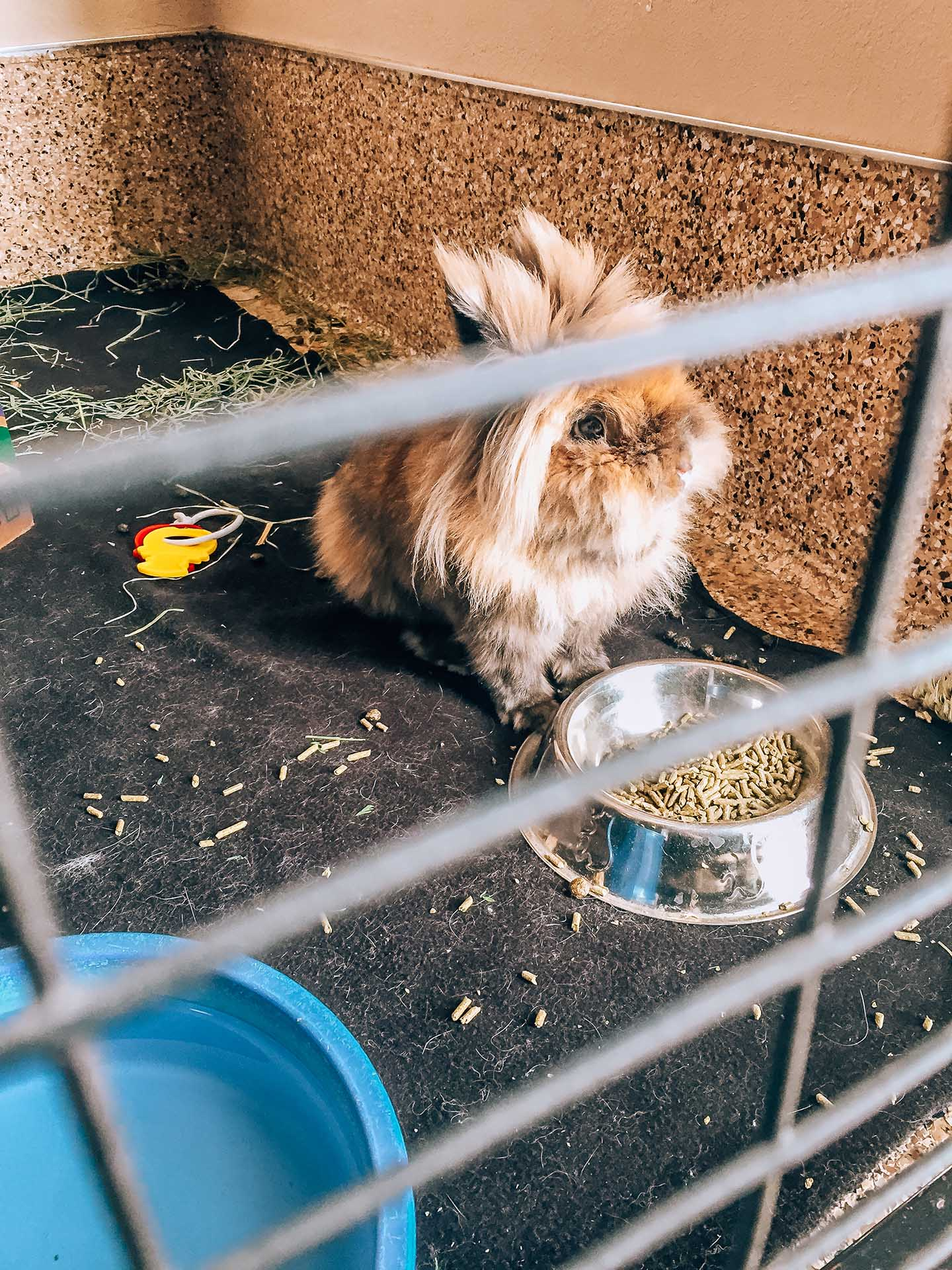 Best Friends Animal Society rescue bunny rabbit in cage