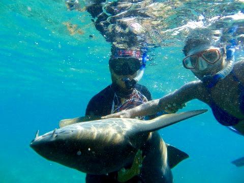 WanderlustMyWay Petting the Nursing Sharks