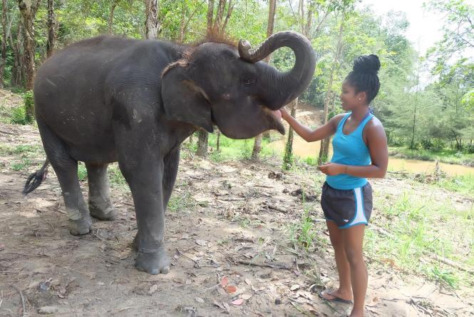 feeding elephants elephant jungle sanctuary