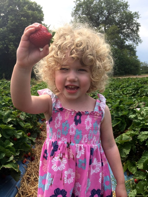 Mrs T picked a strawberry at Crockford Farm, Pick Your Own, Weybridge