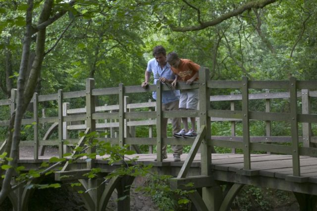 Playing Pooh Sticks in Ashdown Forest, Sussex