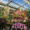 Orchid Festival, Kew Gardens