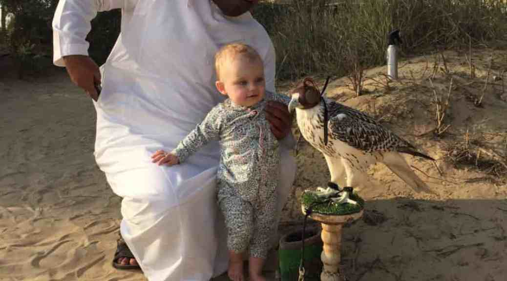Falconry at Bab al Shams