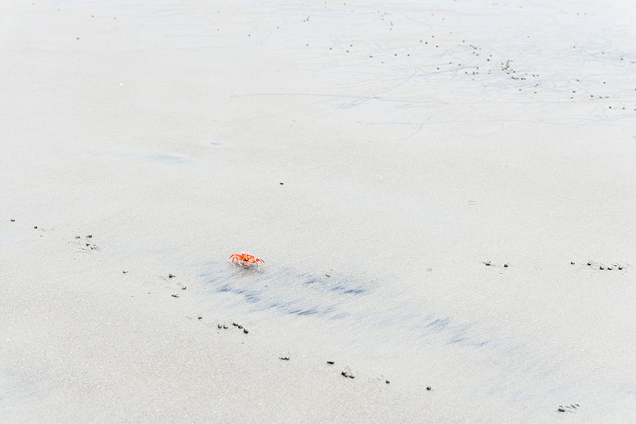 A crab running to hide himself