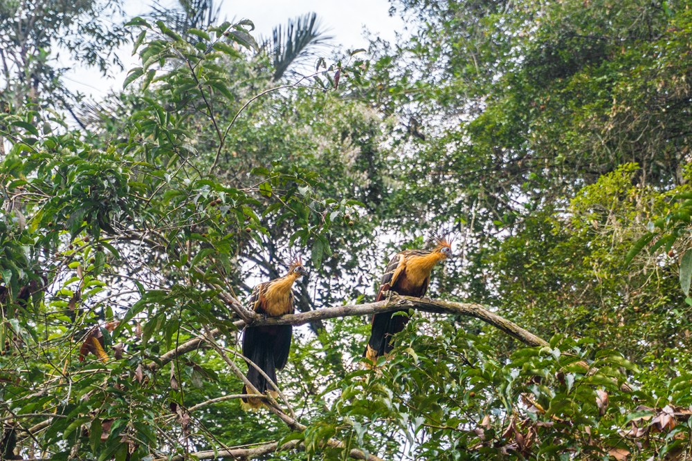 Birds in the Rainforest