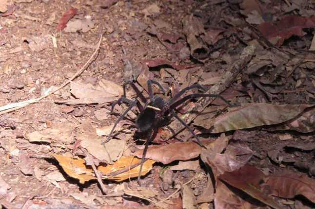 A spider crawling on the unpaved paths