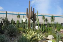 cactus garden changi