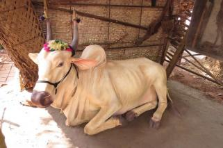 Village life at Ancestral Goa