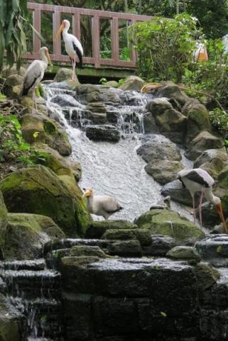 waterfall kl bird park