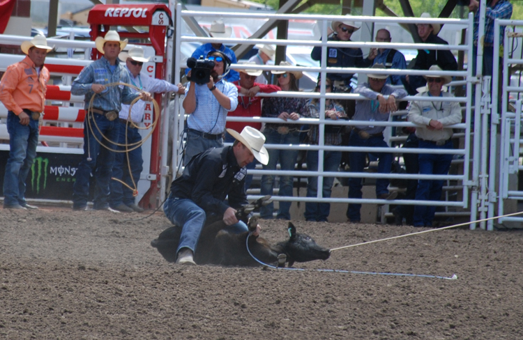 Image of the tie-down roping event at the Calgary Stampede rodeo