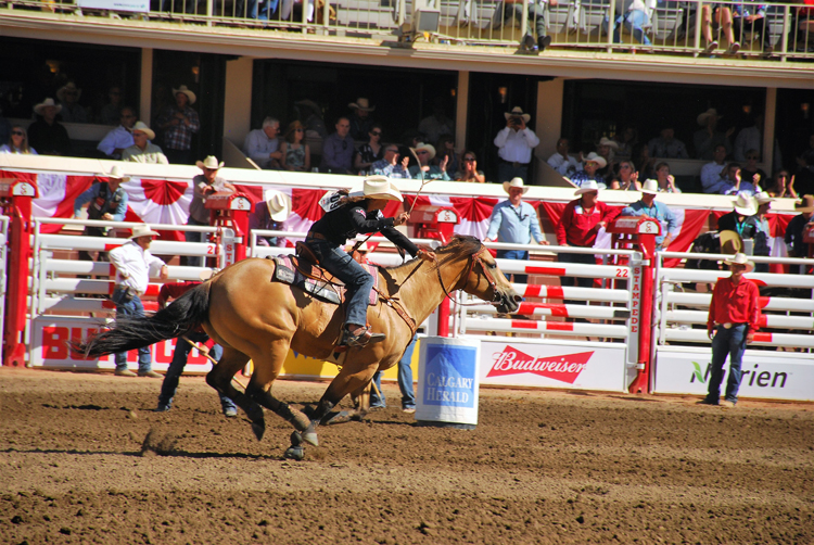 Image of barrel racing at the Calgary Stampede rodeo