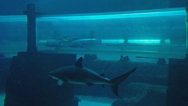An image of a water slide passing through a shark tank at Atlantis Resort, Paradise Island, Bahamas