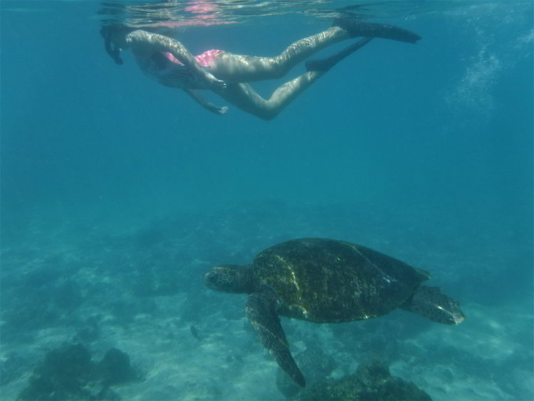 An image of a woman snorkeling with a Galapagos green turtle in the Galapagos Islands