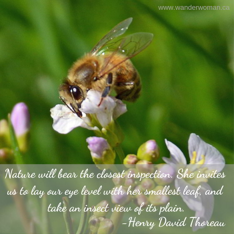 An image of a bee on a flower. Meaningful quotes about nature - Henry David Thoreau